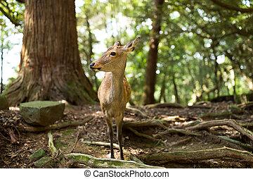 Wild deer in a park