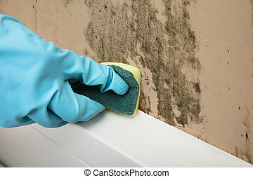Housekeeper Cleaning Mold From Wall With Sponge