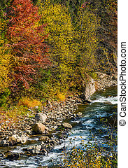 powerful forest brook with rocky shore - powerful mountain...