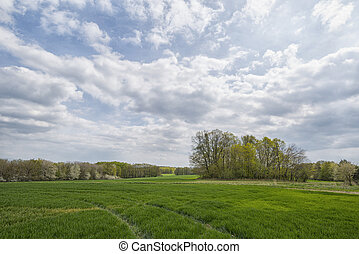 Blue sky in the spring in the field with trees