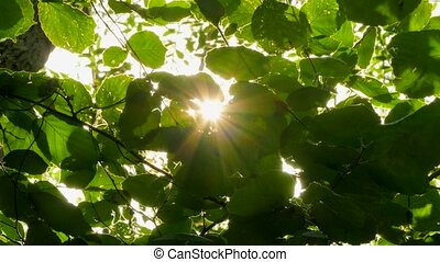 Background of hazel leaves in the wind sun rays.