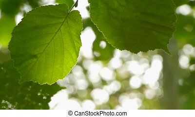 The background is two leaves and sunrays. - The natural...