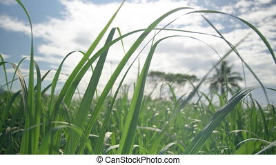 Macro shot of grass against cloudy sky