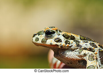 portrait of cute green toad