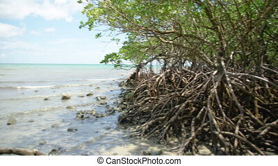 Panoramic shot of roots - A panning shot to the right of the...
