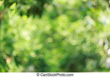green nature blur bokeh background