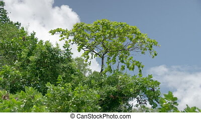 A wide shot of trees leaves and sky.
