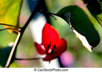 flower screensaver - Flower Photo Samples