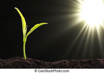 small plant and soil on blue background with sun and...