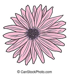 Pink gerbera. Vector illustration. Drawing by hand.
