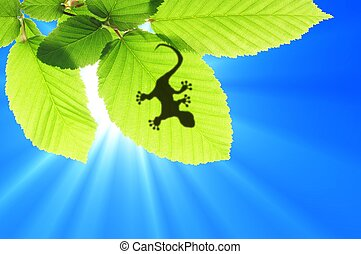 gecko shadow on leaf - gecko shadow on green leaf texture...