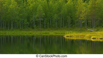 Beautiful lake in the green and lush finnish forest in the...