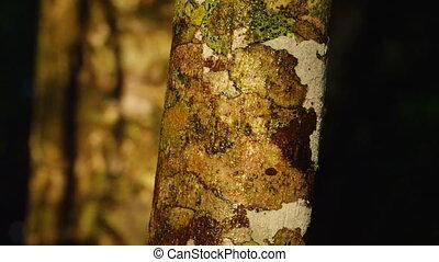 A shot of a tree bark