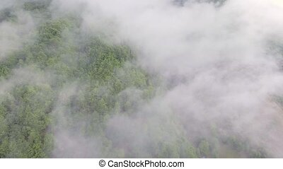 Aerial shot. Flying Over Misty Forest