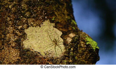 A shot of spider on tree