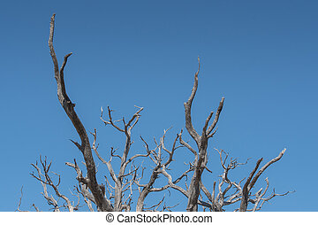 Gnarly Branches of Tree on Clear Blue Sky with copy space...