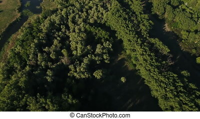 Aerial shot of the green forest with aspen tree tops on a sunny day in summer