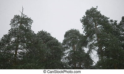 Snow falling in front of trees