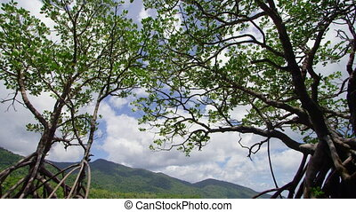 Wide shot of trees and mountains