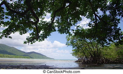 A wide shot of the trees and oceans