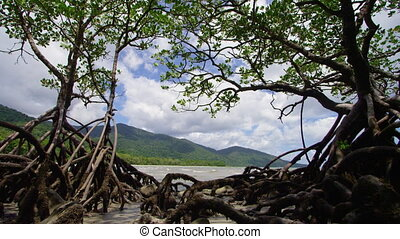 A wide shot of roots and mountains
