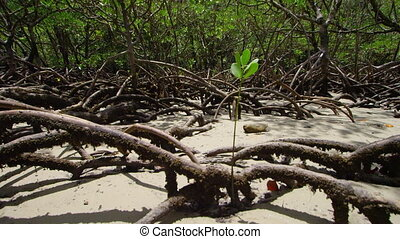 Shot of a plant surrounded by mangroves - A circling shot of...