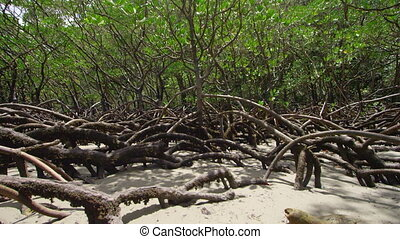 Wide shot of roots with a leaf