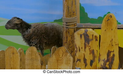 Cute brown sheep in farm