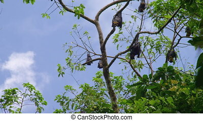 A wide shot of bats on trees. Daylight.