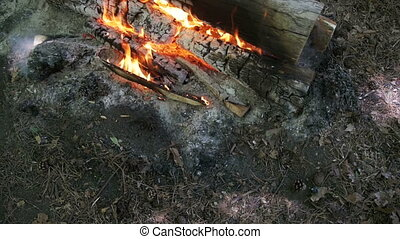 Top View of Campfire of the Branches Burn in the Forest....