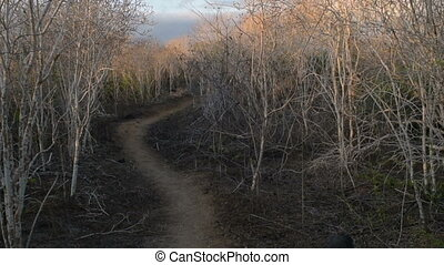 Winter forest path nature landscape at daytime