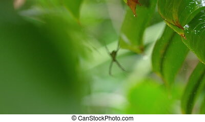 A yellow colored spider on web - A medium shot of a spider...