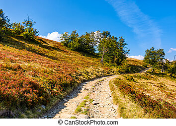 mountain road through hillside with forest. lovely grassy...