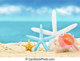 seashells on the summer beach with sand - seashells and...