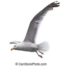 Flying sea gull isolated on the white background