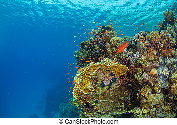 Beautiful coral reef with sealife. Underwater landscape...