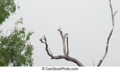 A shot of dead tree
