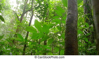 Forest and trees shot - A medium shot of trees and leaves...