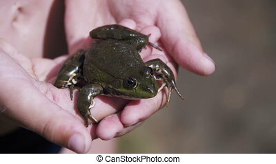Green Frog in the Hands of a Child on the River Bank. Slow...