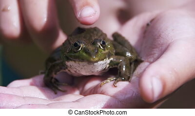The Child is Stroking a Green Frog in his Hand - The child...