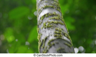 A close up shot of a tree's trunk