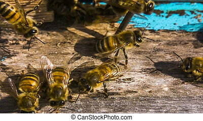 Honey Bees At The Entrance To Hive. Slow motion.