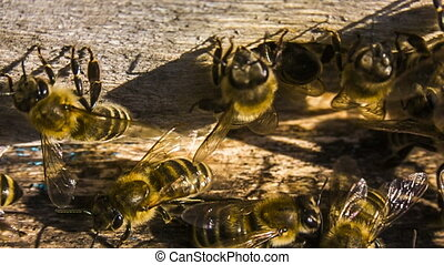 Macro shot: Honey Bees At The Entrance To Hive