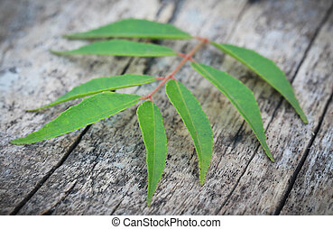 Curry Leaves on wooden surface