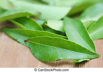 Curry Leaves on timber surface