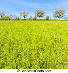 Trees and meadows in Switzerland