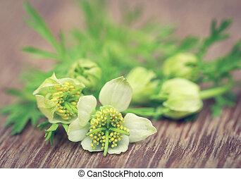Nigella flowers - Ayurvedic Nigella flowers on wooden...