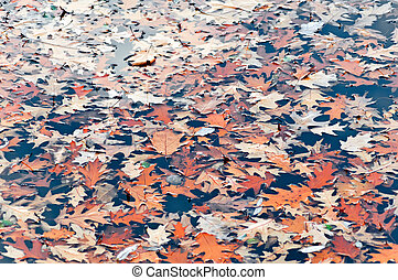 Autumn 2 - Colourful autumn leaves on water