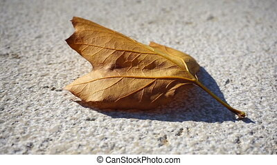 Yellow foliage on the concrete floor background