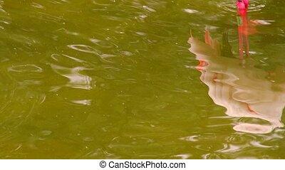 Greater Flamingo. Range: Europe, Asia, Africa, Madagascar. -...